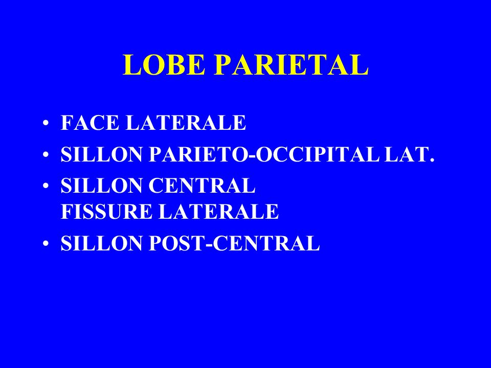 LOBE PARIETAL FACE LATERALE SILLON PARIETO-OCCIPITAL LAT.