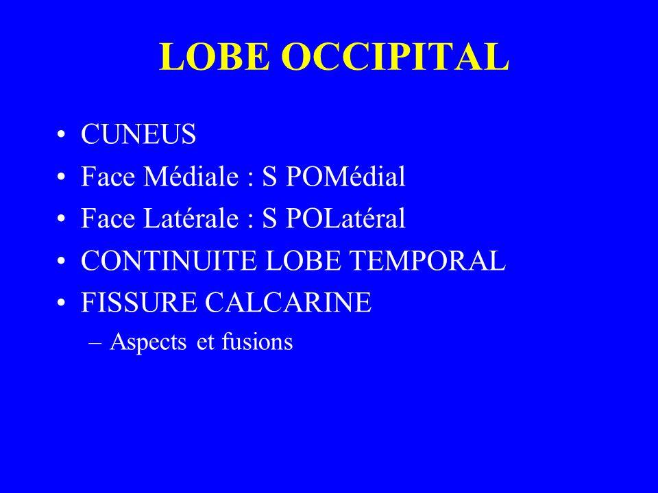 LOBE OCCIPITAL CUNEUS Face Médiale : S POMédial