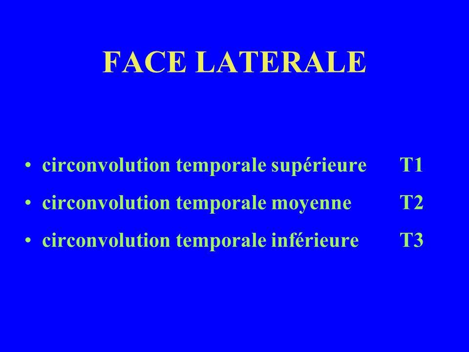 FACE LATERALE circonvolution temporale supérieure T1