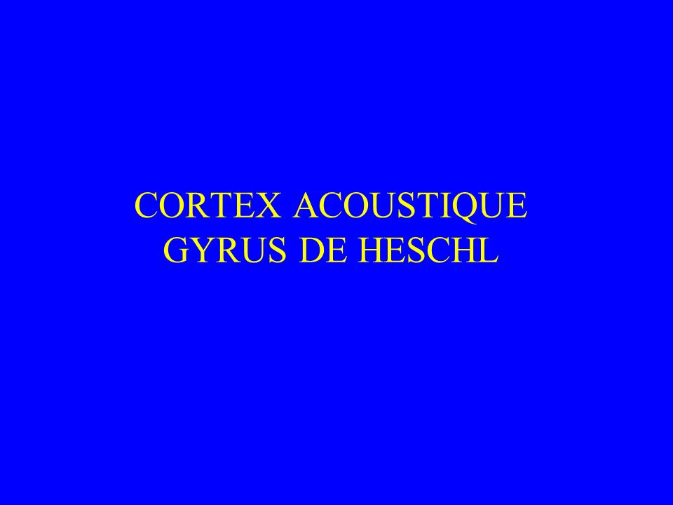 CORTEX ACOUSTIQUE GYRUS DE HESCHL