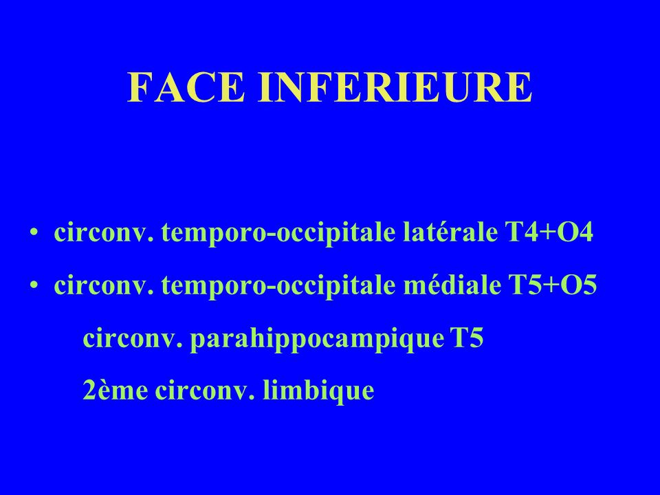 FACE INFERIEURE circonv. temporo-occipitale latérale T4+O4