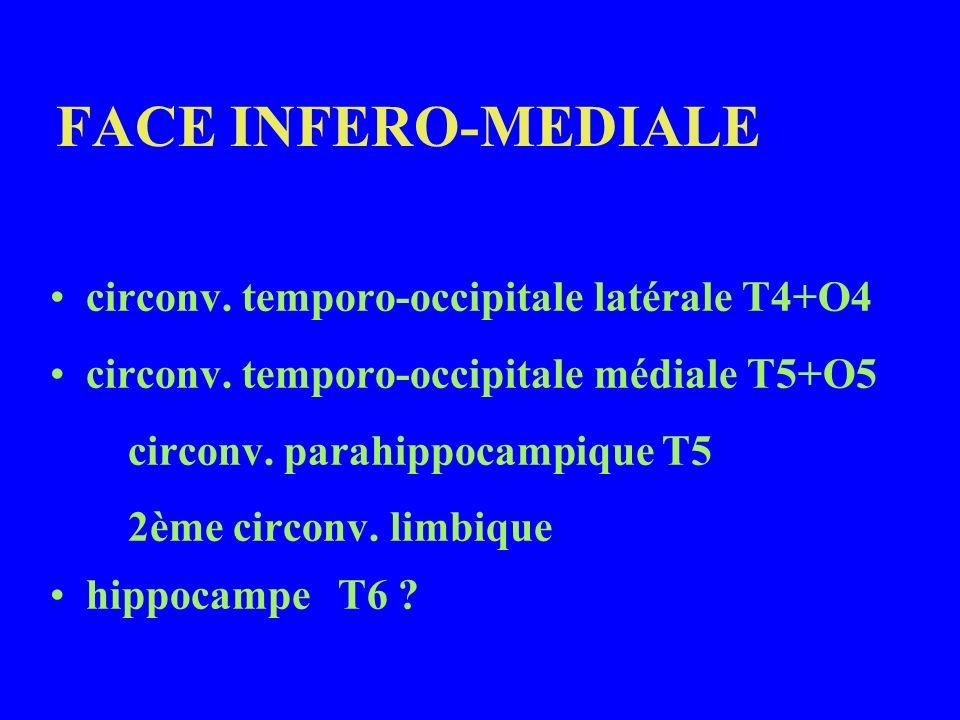 FACE INFERO-MEDIALE circonv. temporo-occipitale latérale T4+O4