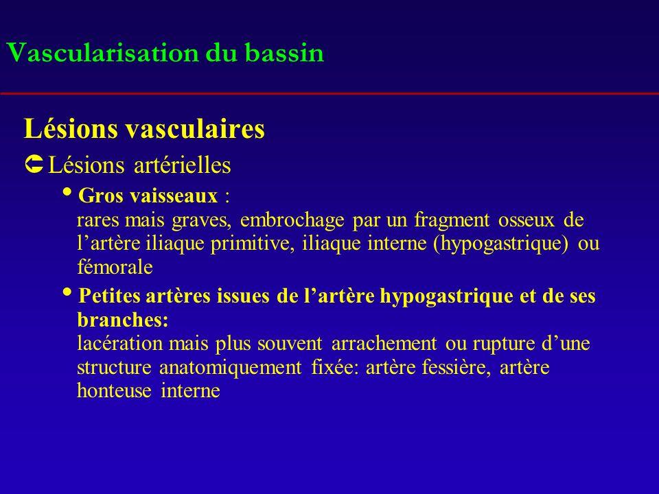 Vascularisation du bassin