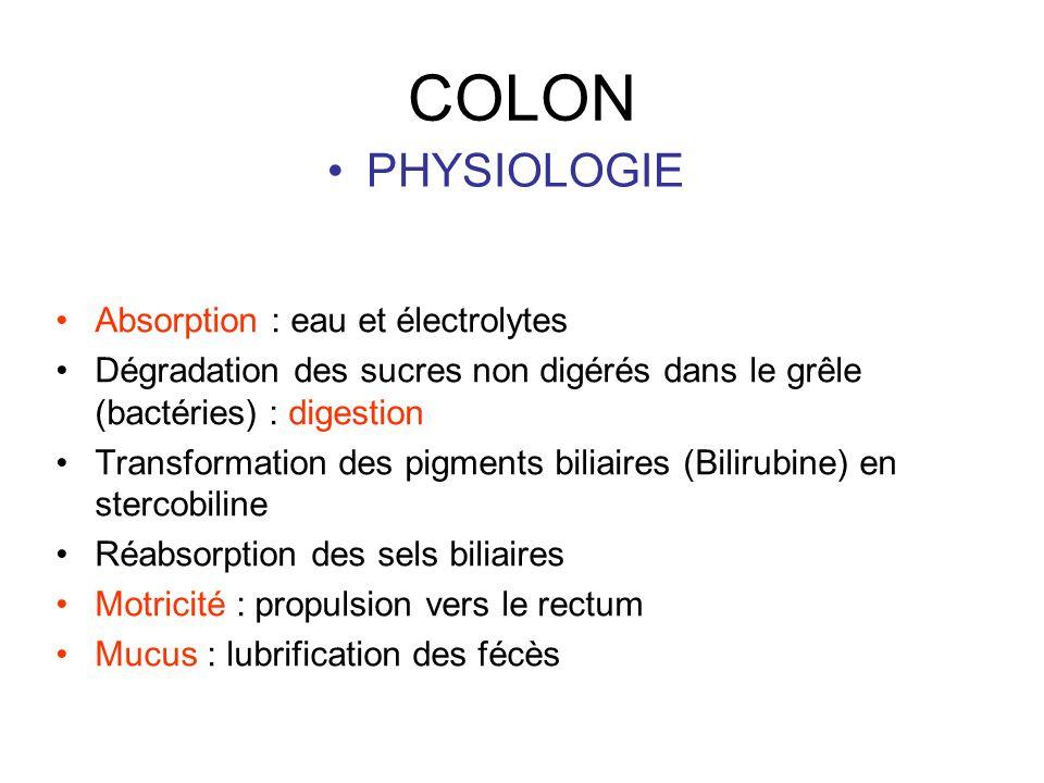 COLON PHYSIOLOGIE Absorption : eau et électrolytes