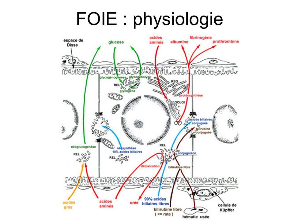 FOIE : physiologie