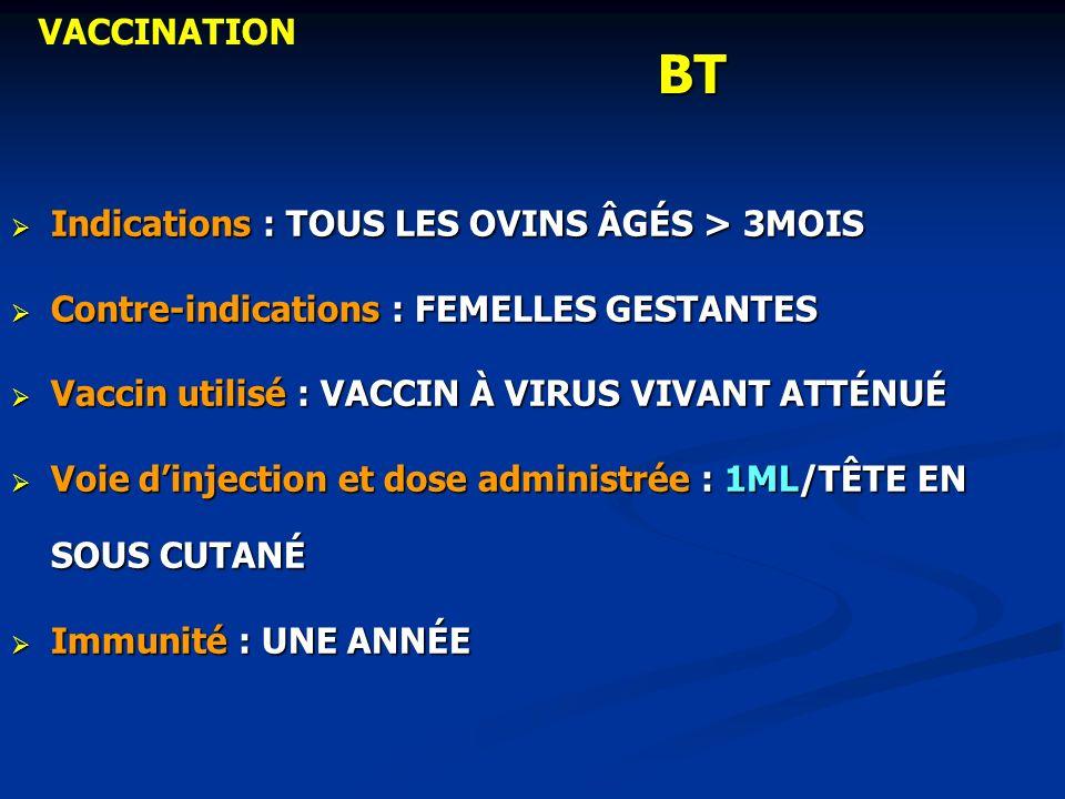BT VACCINATION Indications : TOUS LES OVINS ÂGÉS > 3MOIS