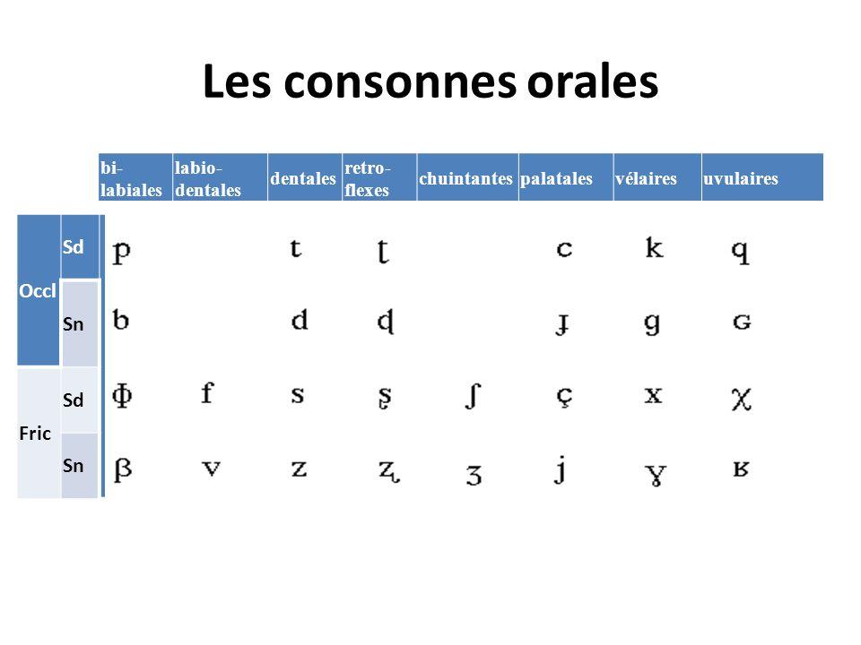 Les consonnes orales Occl Sd Sn Fric bi- labiales labio- dentales