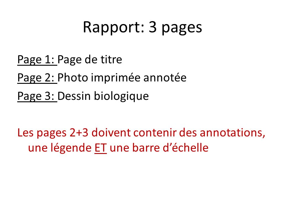 Rapport: 3 pages