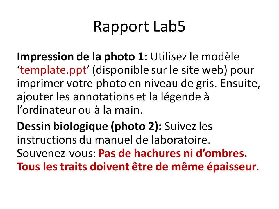 Rapport Lab5