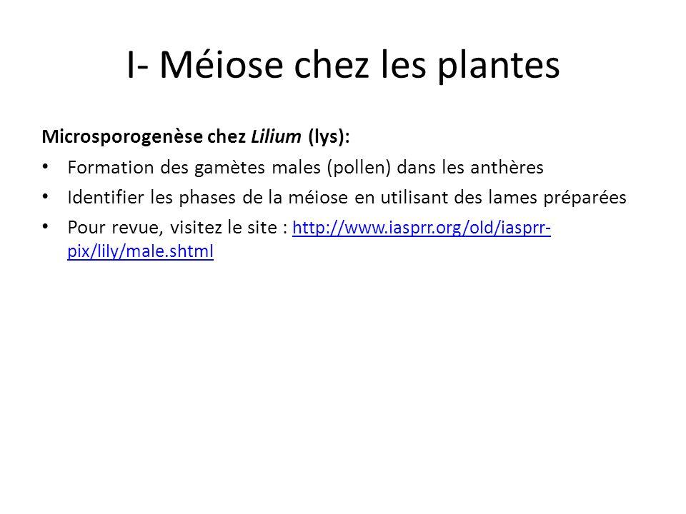 I- Méiose chez les plantes