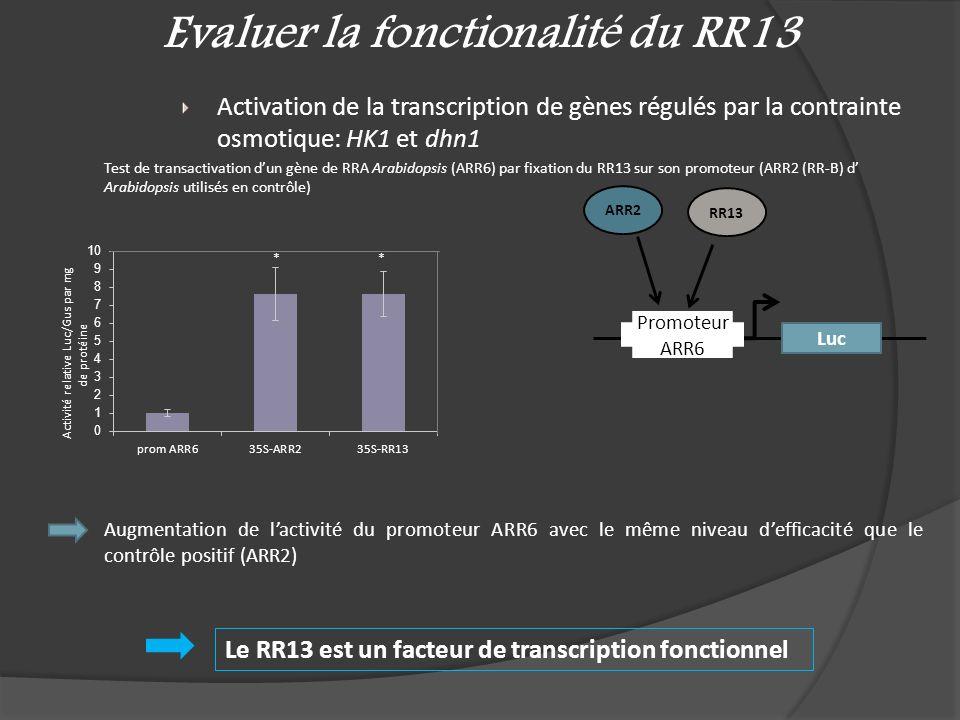 Evaluer la fonctionalité du RR13