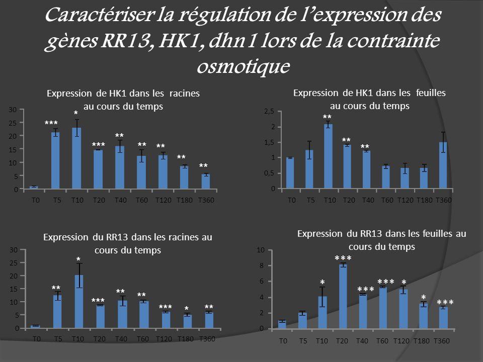 Caractériser la régulation de l'expression des gènes RR13, HK1, dhn1 lors de la contrainte osmotique