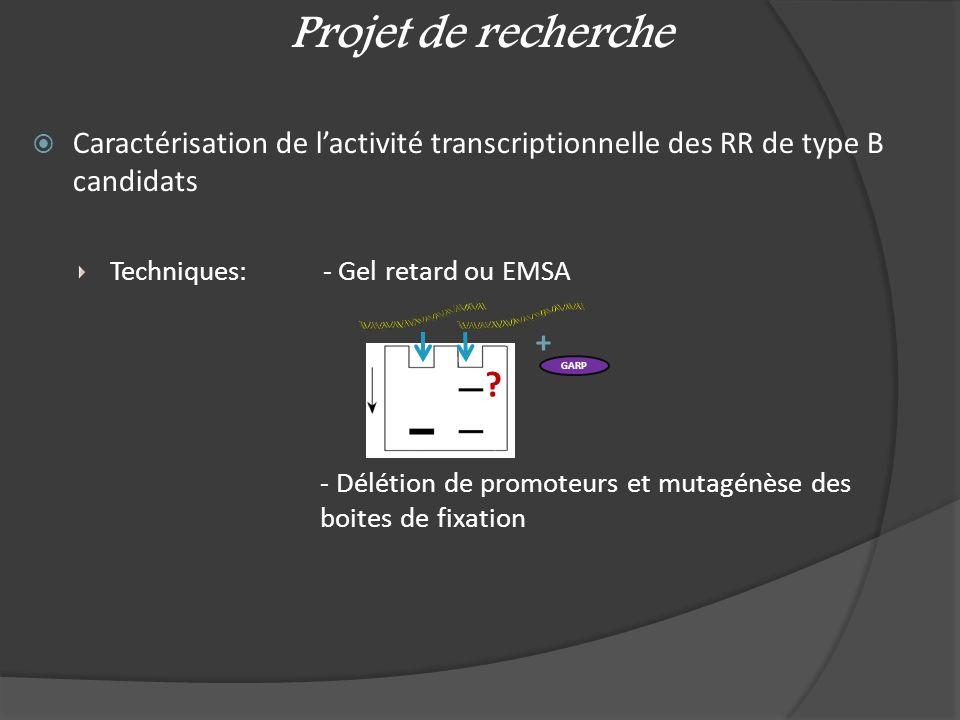 Projet de recherche Caractérisation de l'activité transcriptionnelle des RR de type B candidats. Techniques: - Gel retard ou EMSA.