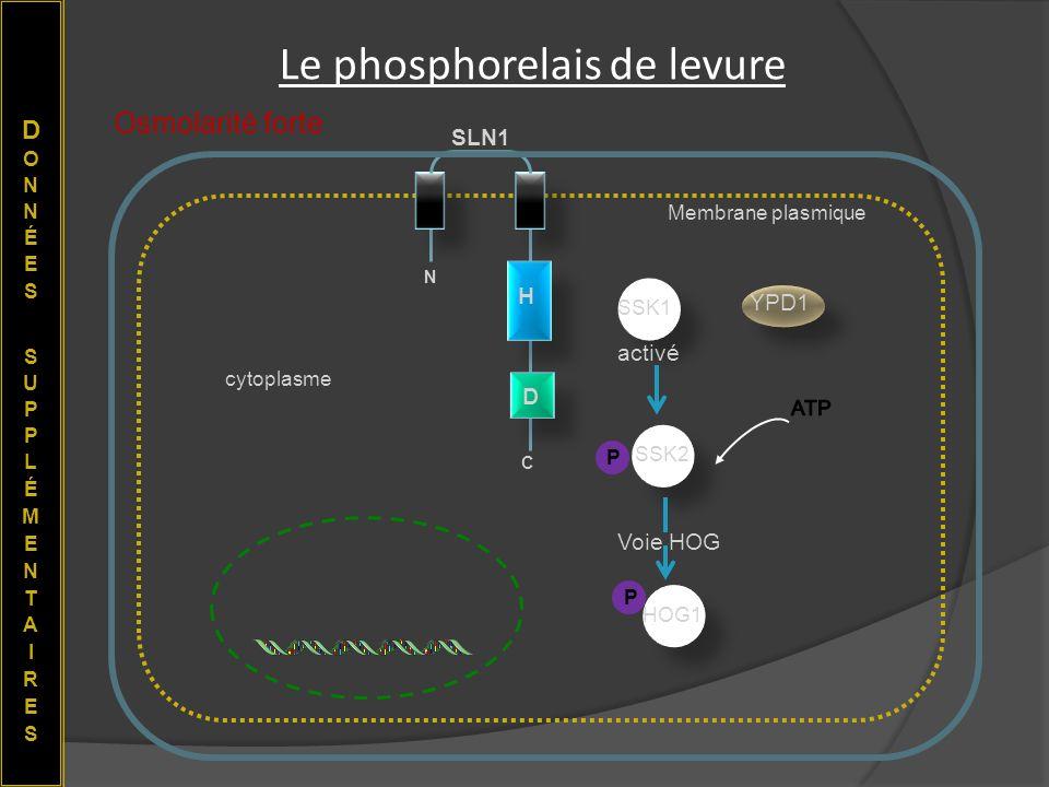 Le phosphorelais de levure