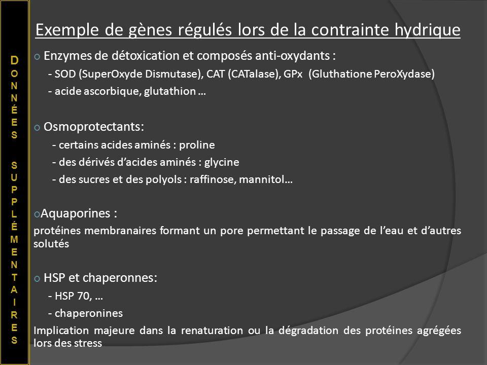 Exemple de gènes régulés lors de la contrainte hydrique