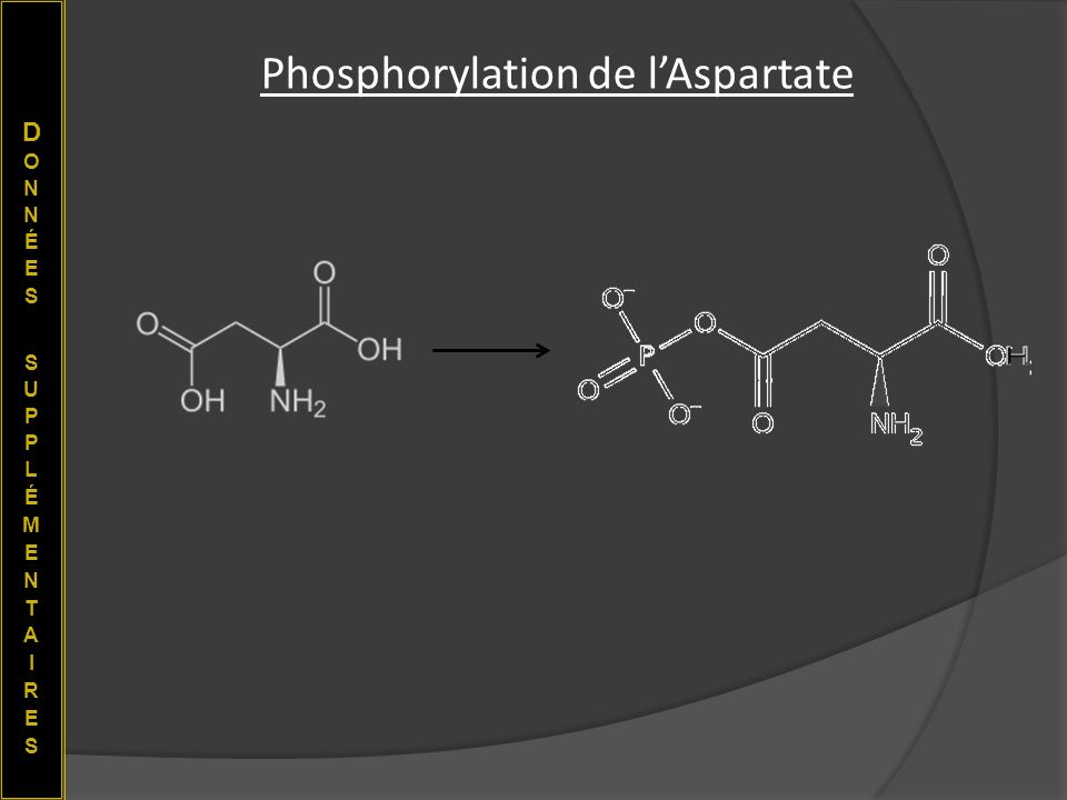 Phosphorylation de l'Aspartate
