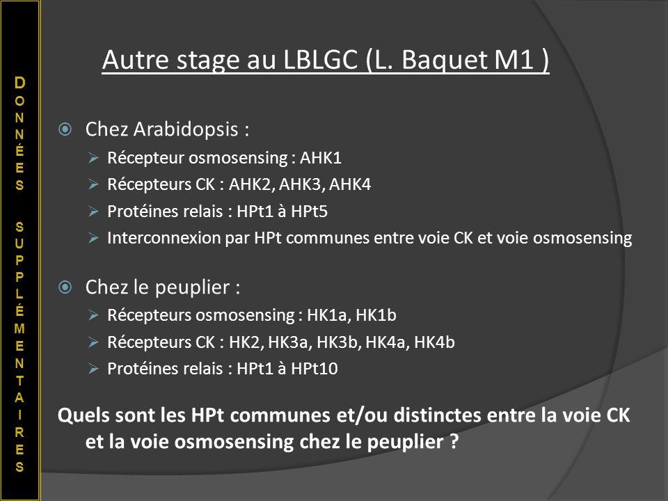 Autre stage au LBLGC (L. Baquet M1 )