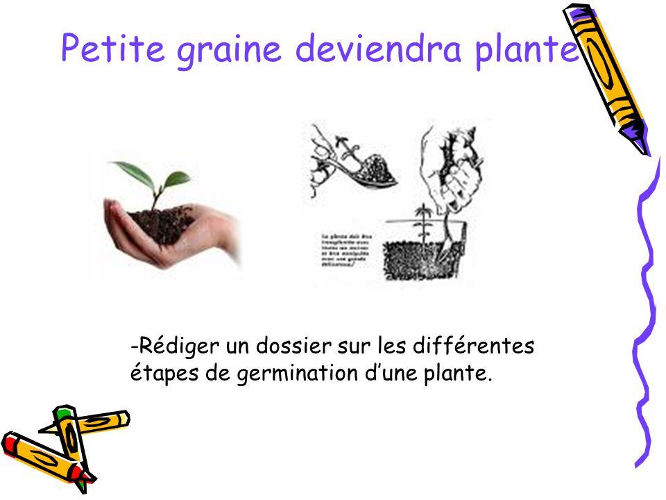 Petite graine deviendra plante