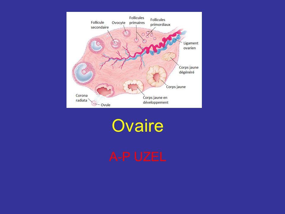 Ovaire A-P UZEL