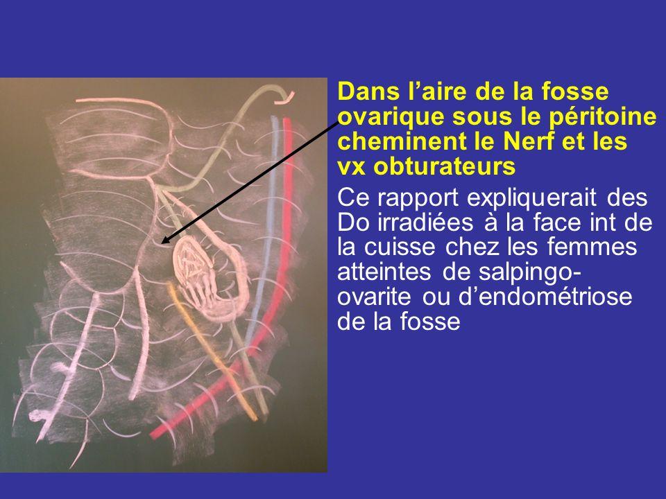 Dans l'aire de la fosse ovarique sous le péritoine cheminent le Nerf et les vx obturateurs