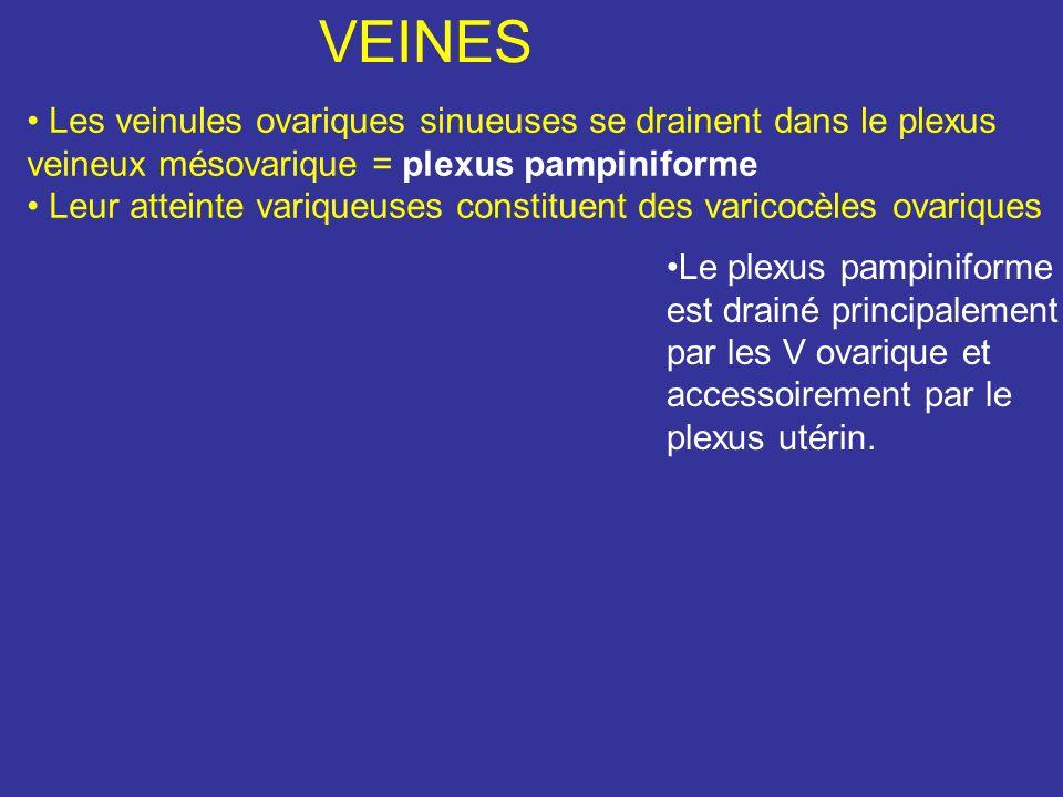 VEINES Les veinules ovariques sinueuses se drainent dans le plexus veineux mésovarique = plexus pampiniforme.