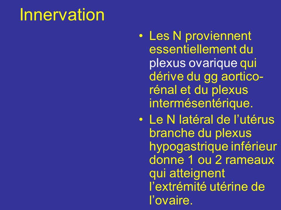 Innervation Les N proviennent essentiellement du plexus ovarique qui dérive du gg aortico-rénal et du plexus intermésentérique.