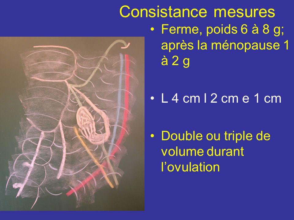 Consistance mesures Ferme, poids 6 à 8 g; après la ménopause 1 à 2 g