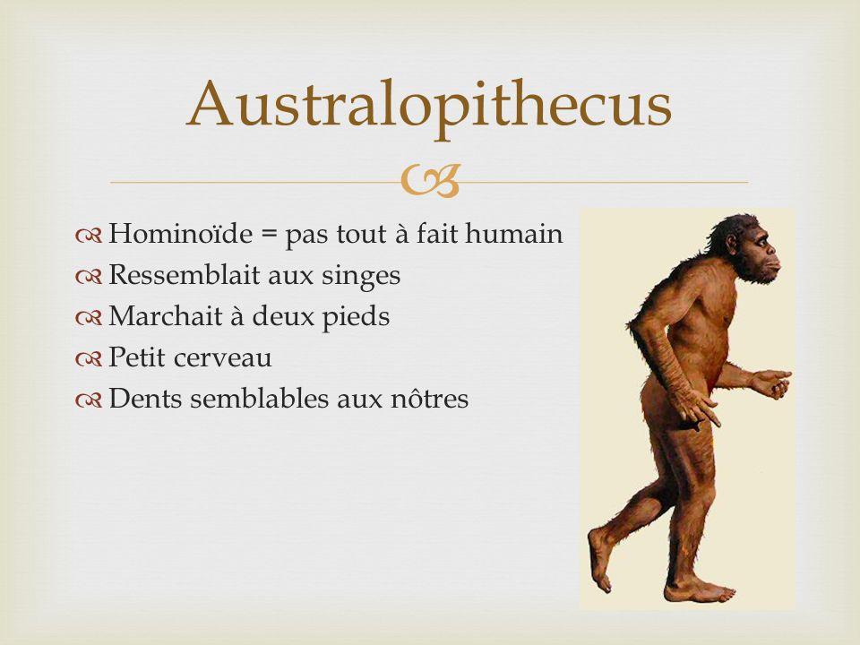 Australopithecus Hominoïde = pas tout à fait humain