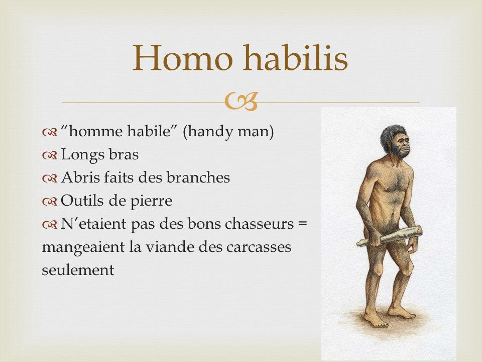 Homo habilis homme habile (handy man) Longs bras
