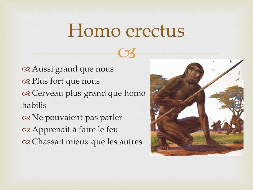 Homo erectus Aussi grand que nous Plus fort que nous