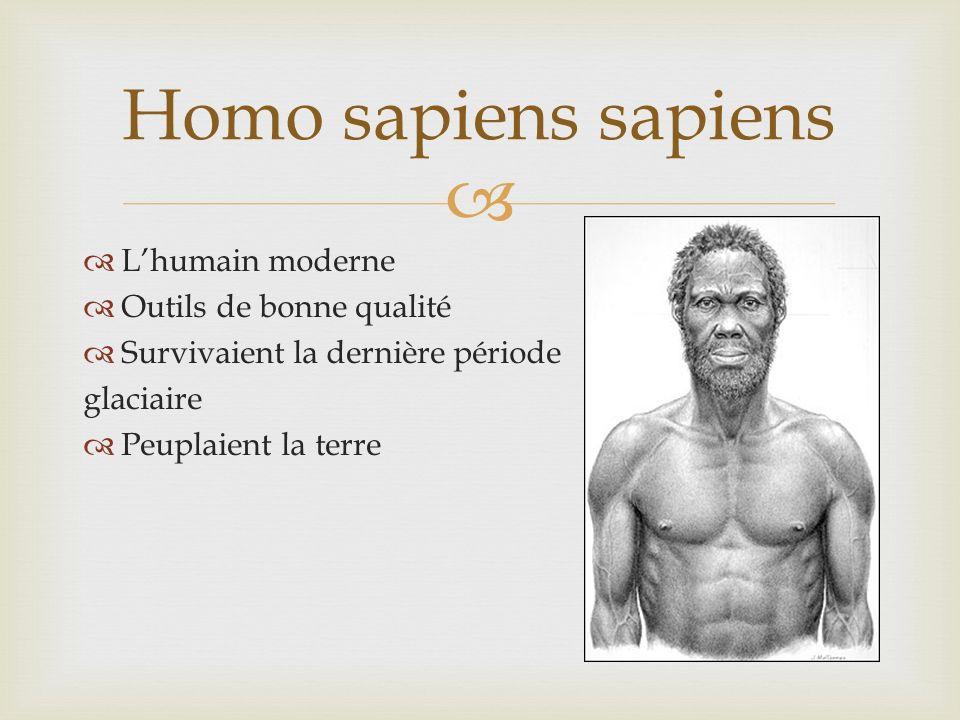 Homo sapiens sapiens L'humain moderne Outils de bonne qualité