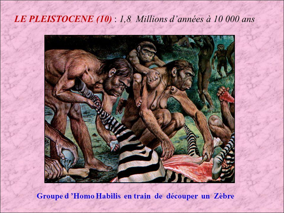LE PLEISTOCENE (10) : 1,8 Millions d'années à 10 000 ans