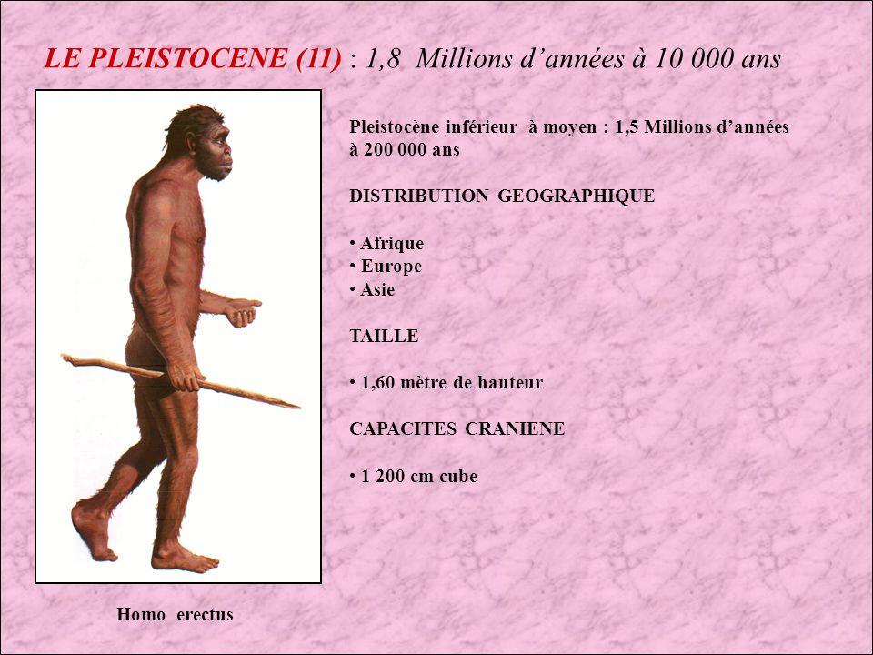LE PLEISTOCENE (11) : 1,8 Millions d'années à 10 000 ans