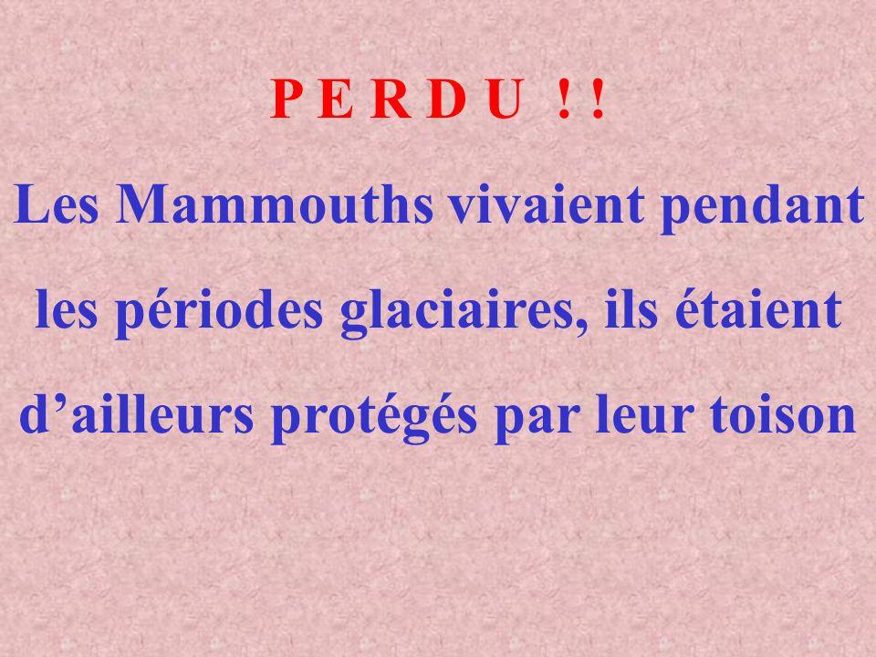 Les Mammouths vivaient pendant les périodes glaciaires, ils étaient