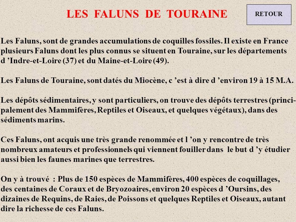 LES FALUNS DE TOURAINE RETOUR. Les Faluns, sont de grandes accumulations de coquilles fossiles. Il existe en France.