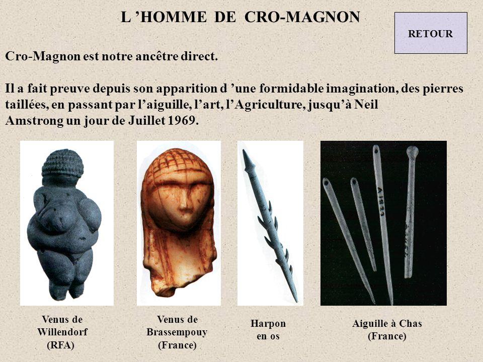 L 'HOMME DE CRO-MAGNON Cro-Magnon est notre ancêtre direct.