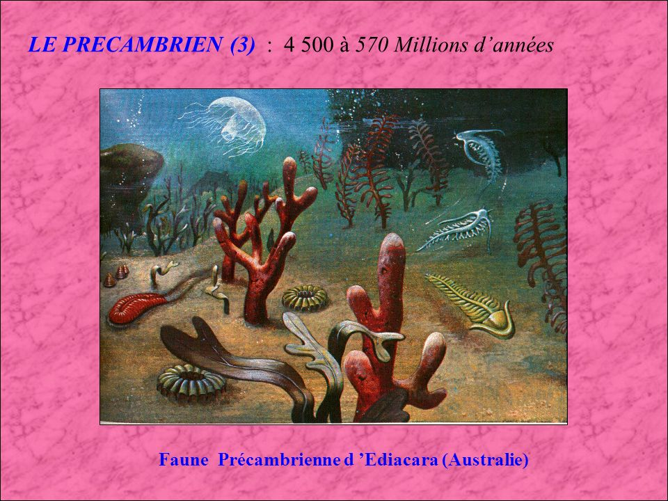Faune Précambrienne d 'Ediacara (Australie)