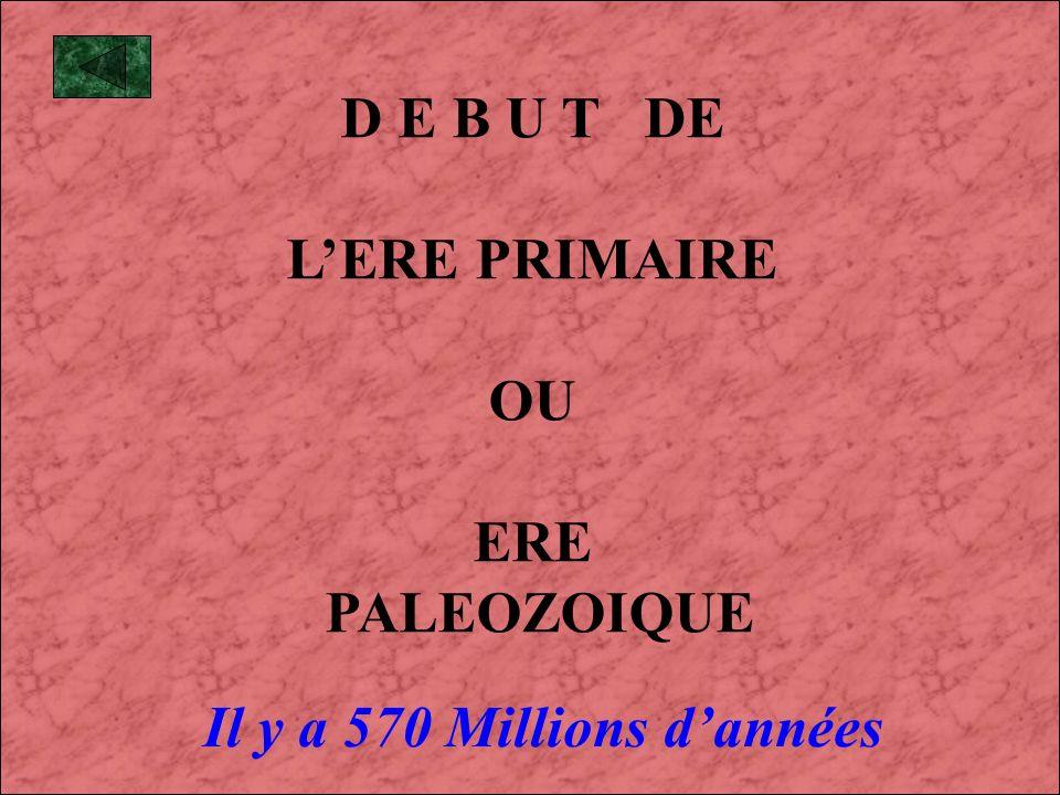 D E B U T DE L'ERE PRIMAIRE OU ERE PALEOZOIQUE Il y a 570 Millions d'années
