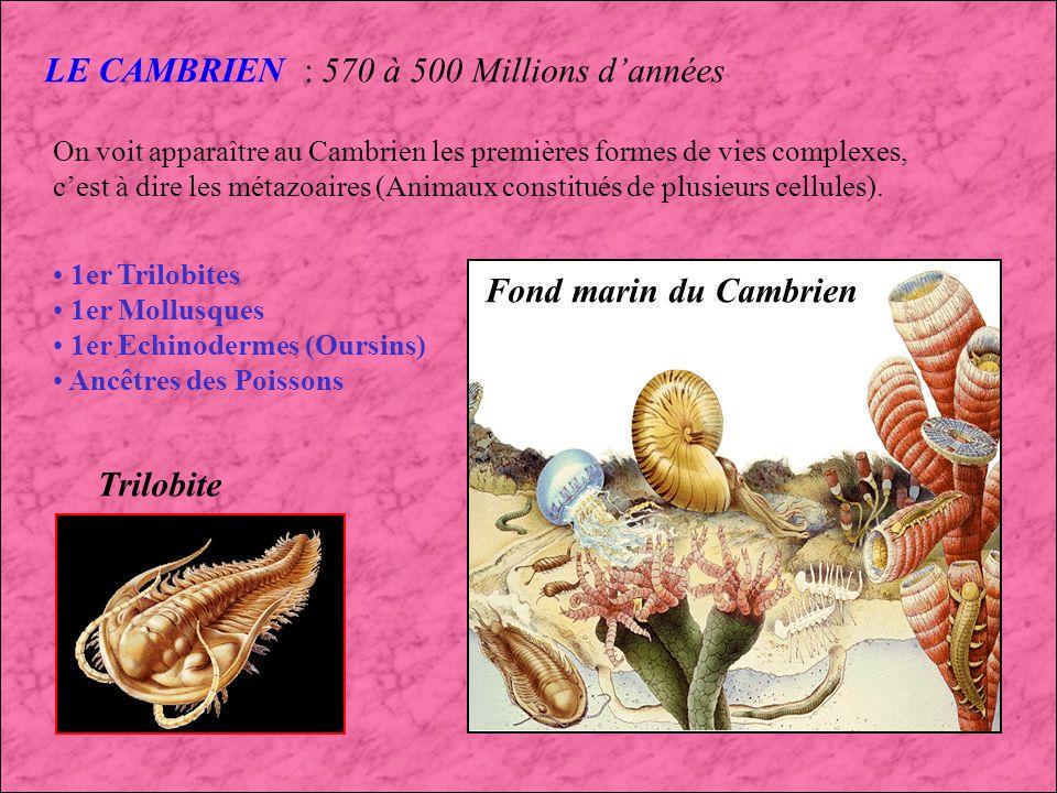 LE CAMBRIEN : 570 à 500 Millions d'années