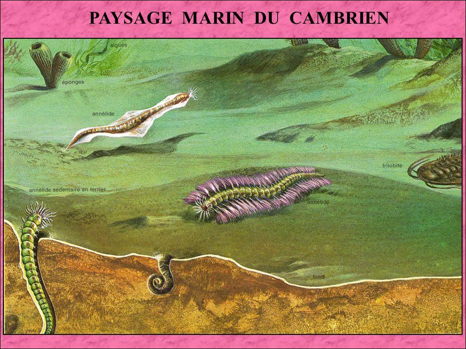 PAYSAGE MARIN DU CAMBRIEN
