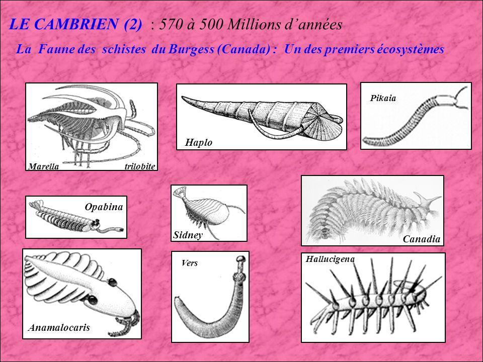 LE CAMBRIEN (2) : 570 à 500 Millions d'années