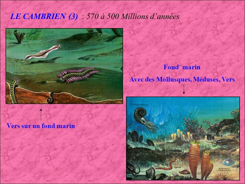 Avec des Mollusques, Méduses, Vers