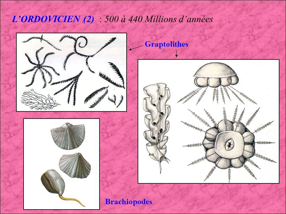 L'ORDOVICIEN (2) : 500 à 440 Millions d'années