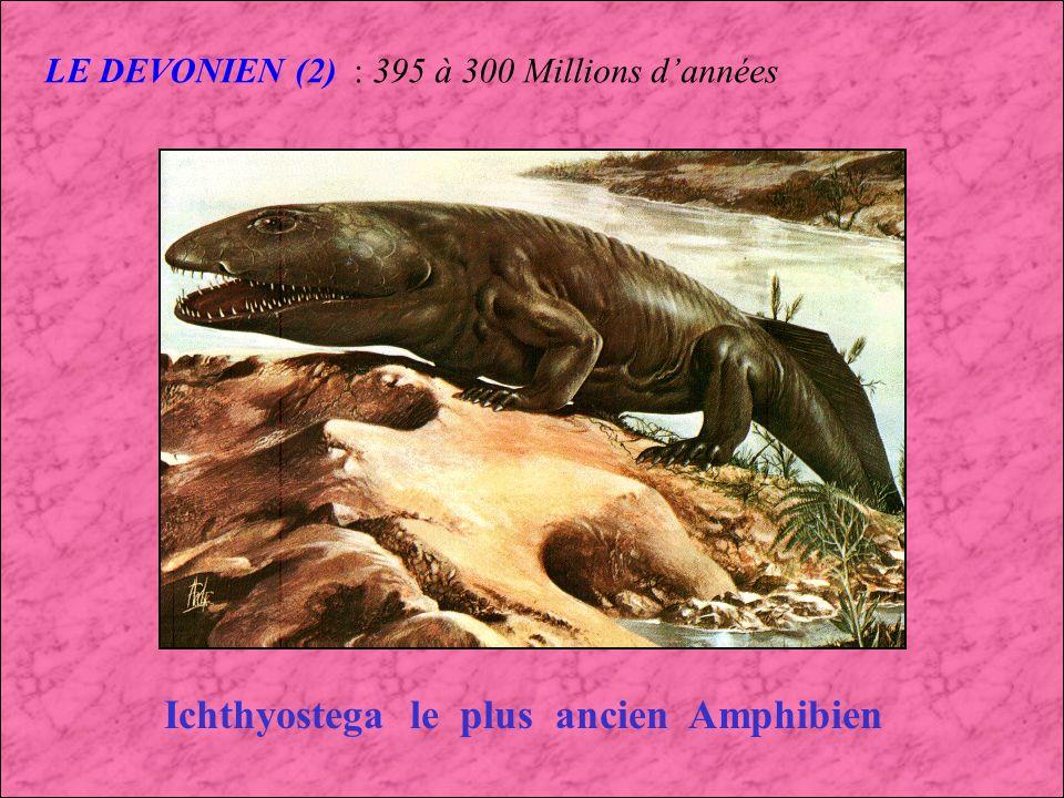 Ichthyostega le plus ancien Amphibien