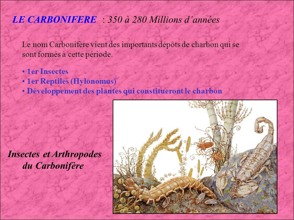 Insectes et Arthropodes