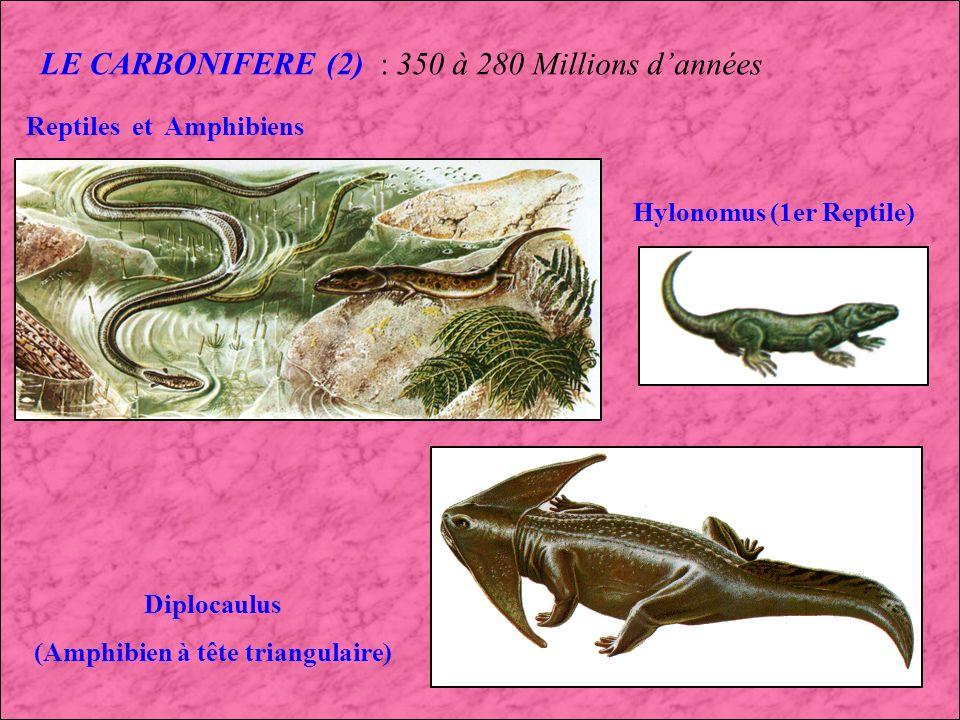 LE CARBONIFERE (2) : 350 à 280 Millions d'années