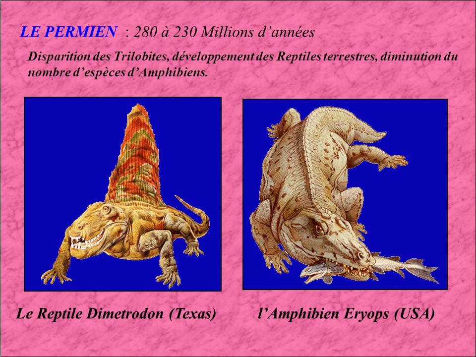 LE PERMIEN : 280 à 230 Millions d'années