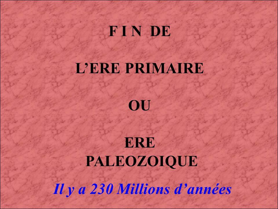 F I N DE L'ERE PRIMAIRE OU ERE PALEOZOIQUE Il y a 230 Millions d'années