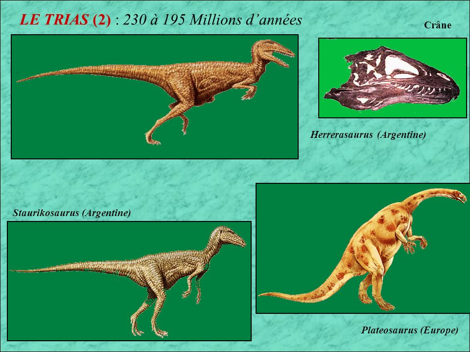 LE TRIAS (2) : 230 à 195 Millions d'années