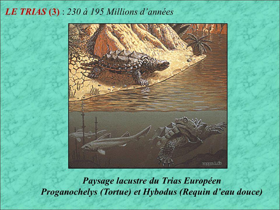 LE TRIAS (3) : 230 à 195 Millions d'années